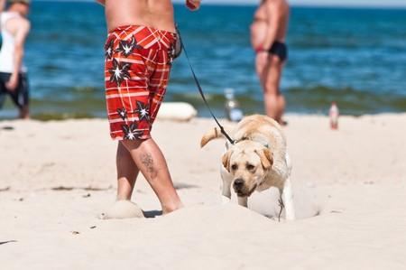 dog on the beach photo