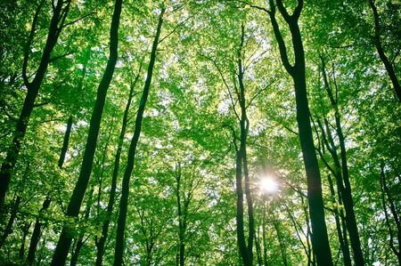 sunlight being detectable in trees in the forest  photo