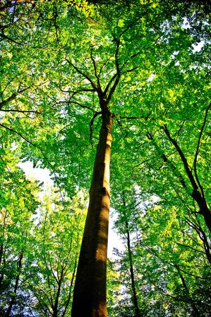 sunlight being detectable in trees in the forest  Stock Photo