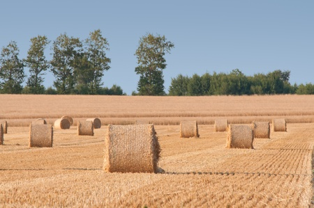 Straw rolls on farmer field in the summer photo