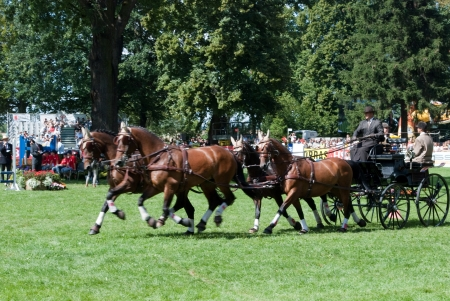 carriage drive show in strzegom at HSBC FEI World Cup 2009