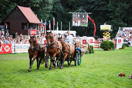 hackney carriage: carriage drive show in strzegom at HSBC FEI World Cup 2009