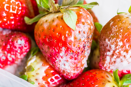 uneatable: strawberry with mold fungus no longer suitable for consumption Stock Photo