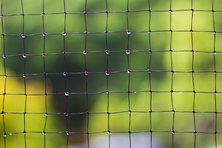 netlike: Metal Net in front of green garden after the rain