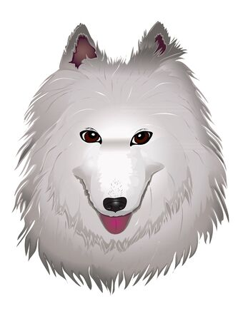 vector purebred fluffy white Samoyed dog smiles. vector illustration eps 10 Vector