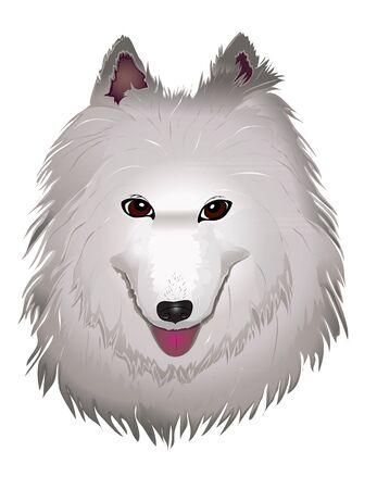 samoyed: vector purebred fluffy white Samoyed dog smiles. vector illustration eps 10