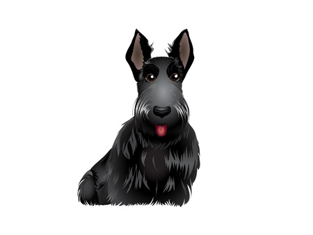 terriers: Black Scottish Terrier vector illustration eps 10