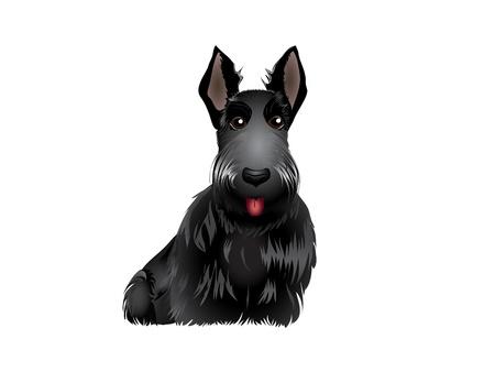 Black Scottish Terrier vector illustration eps 10