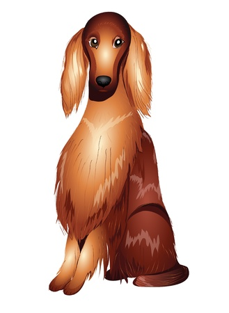 Red Irish setter vector illustration eps 10 Vector