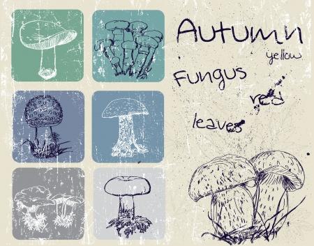 Vintage poster with autumn plants and fungus  Illusztráció