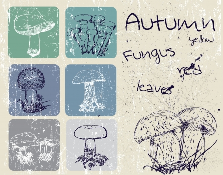 Vintage poster with autumn plants and fungus  Illustration