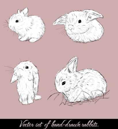 Vintage set with cute rabbits Stock Vector - 17589704