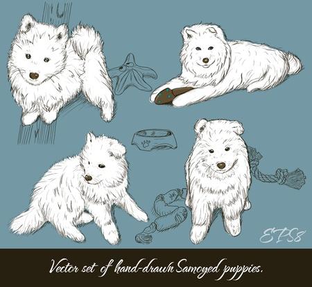 samoyed: Vintage set of samoyed puppies. Vector illustration