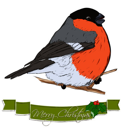 bullfinch: Christmas card with bullfinch Stock Photo