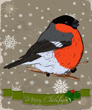 bullfinch: Christmas card with bullfinch Stock Photo