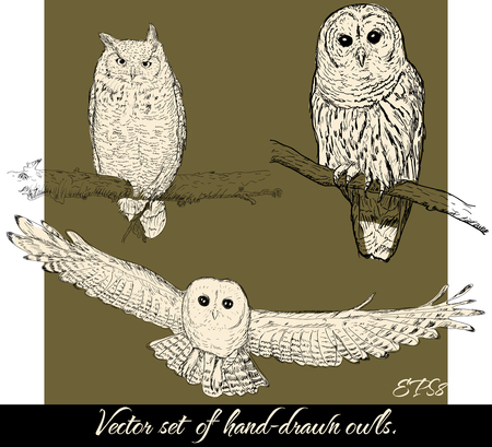 owl tattoo: Set of isolated hand-drawn owls 2. Vector illustration EPS8