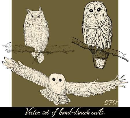 Set of isolated hand-drawn owls 2. Vector illustration EPS8 Ilustração Vetorial