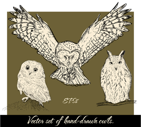 prey: Set of isolated hand-drawn owls 1. Vector illustration EPS8