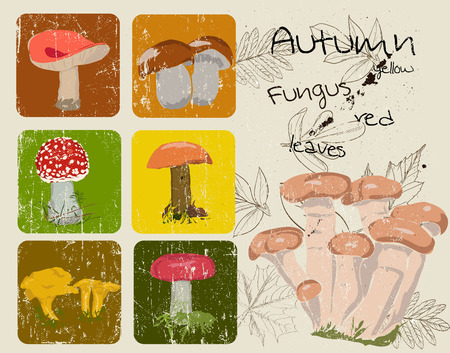 a fly agaric: Vintage poster with autumn plants and fungus. Vector illustration EPS8