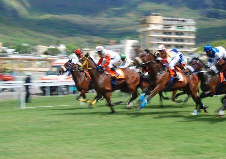 cavallo in corsa: Corse di cavalli Archivio Fotografico