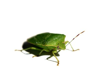 resembling: Leaf resembling insect Stock Photo