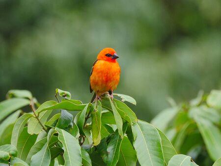 Orange bird on green background Banque d'images
