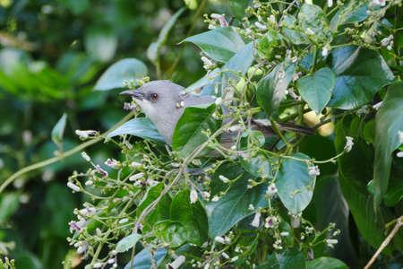 Cute Gray bird in natural environment