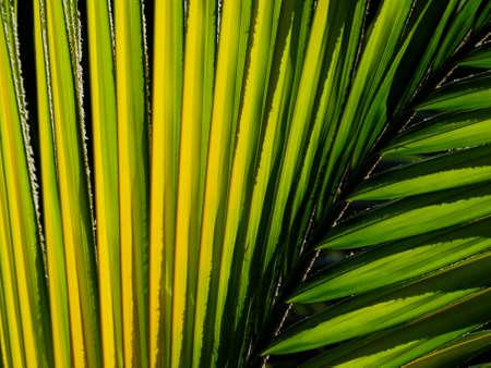 Backlit palm tree branch