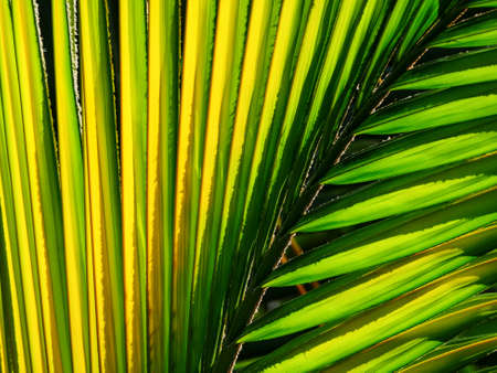 Backlit diagonal lines of palm tree branch