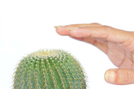 Hand touching spike of plant