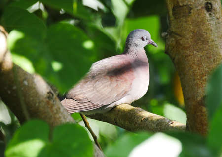 Bird closing eyes