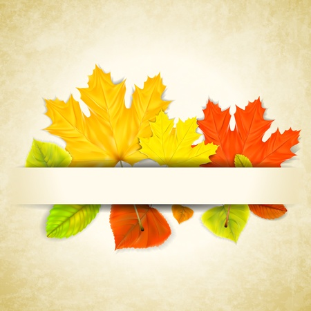 Autumn leaves on scratched paper background  Stock Vector - 21526400