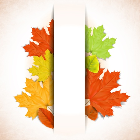 Abstract autumn background with white strip for text  Vector