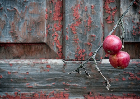 red apples on old shabby wooden background photo