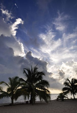 carribean: Silhouette of palm trees on the beach