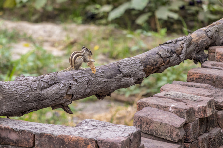 A Squirrel eating food outside my house. Stok Fotoğraf