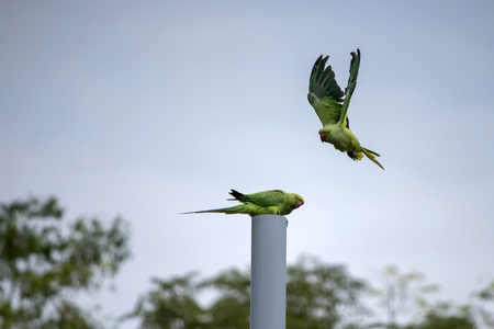 Two parrot playing and having fun after rain.