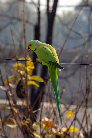 A Parrot playing on a Wire at my house roof top.