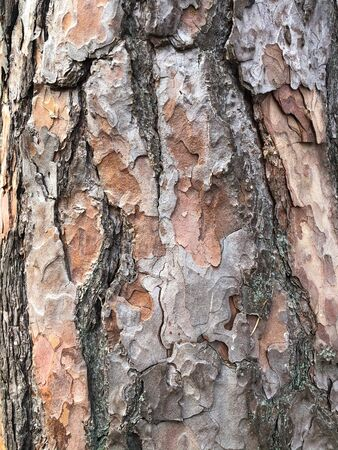 Old dry tree bark. Perfect background with a natural motif. Dry wrinkled multilayer wood surface. Natural pattern created by nature 写真素材