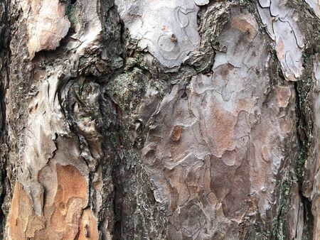 Old dry tree bark. Perfect background with a natural motif. Dry wrinkled multilayer wood surface. Natural pattern created by nature. Horizontal photography