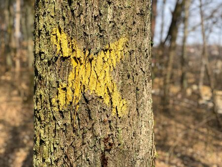 Tree with X on it. Sign for cutting trees. Cracked bark of a plant. Dead yellow wood. Harmonious embossed wood texture. Perfect background with a natural tracery. Old dry tree trunk. Dry multilayer wood surface. Natural pattern created by nature.
