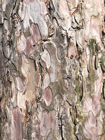 Perfect background with a natural tracery. Old dry tree bark. Dry wrinkled multilayer wood surface. Natural pattern created by nature. Nude colours 免版税图像