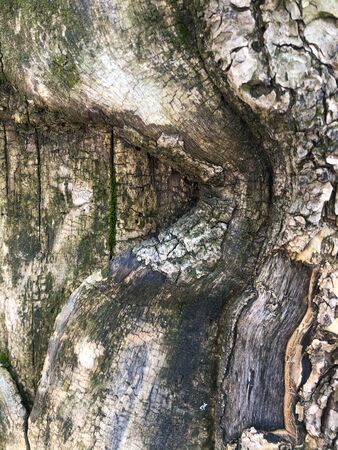 The surface of an old wrinkled tree trunk. Cracked bark of a plant. Harmonious embossed wood texture. Perfect background with a natural tracery. Old dry tree bark. Dry multilayer wood surface. Natural pattern created by nature. 免版税图像