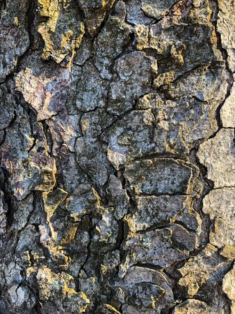 The surface of an old wrinkled tree. Cracked bark of a plant. Harmonious embossed wood texture. Perfect background with a natural tracery. Old dry tree bark. Dry multilayer wood surface. Natural pattern created by nature.