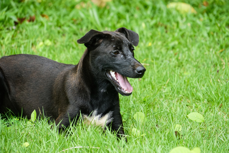 happy black puppy dog play in a park Stock Photo
