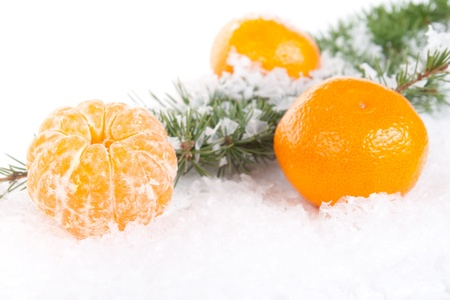 tangerines with a pine branch on snow background photo