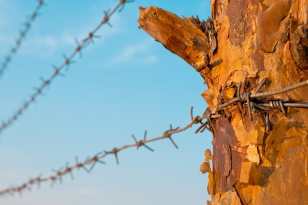 Barbed wire on a wooden post against blue sky