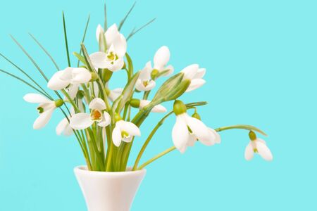 Delicate snowdrops on a blue background Stock Photo