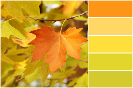 autumn colour: Red ang green autumn sycamore leaves background and colour palette with complimentary swatches