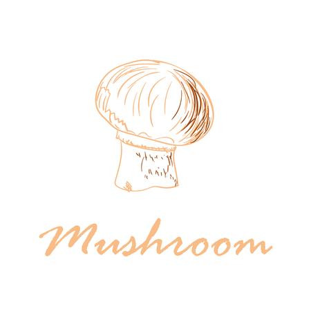 Hand drawn vector illustration of mushroom isolated on white background
